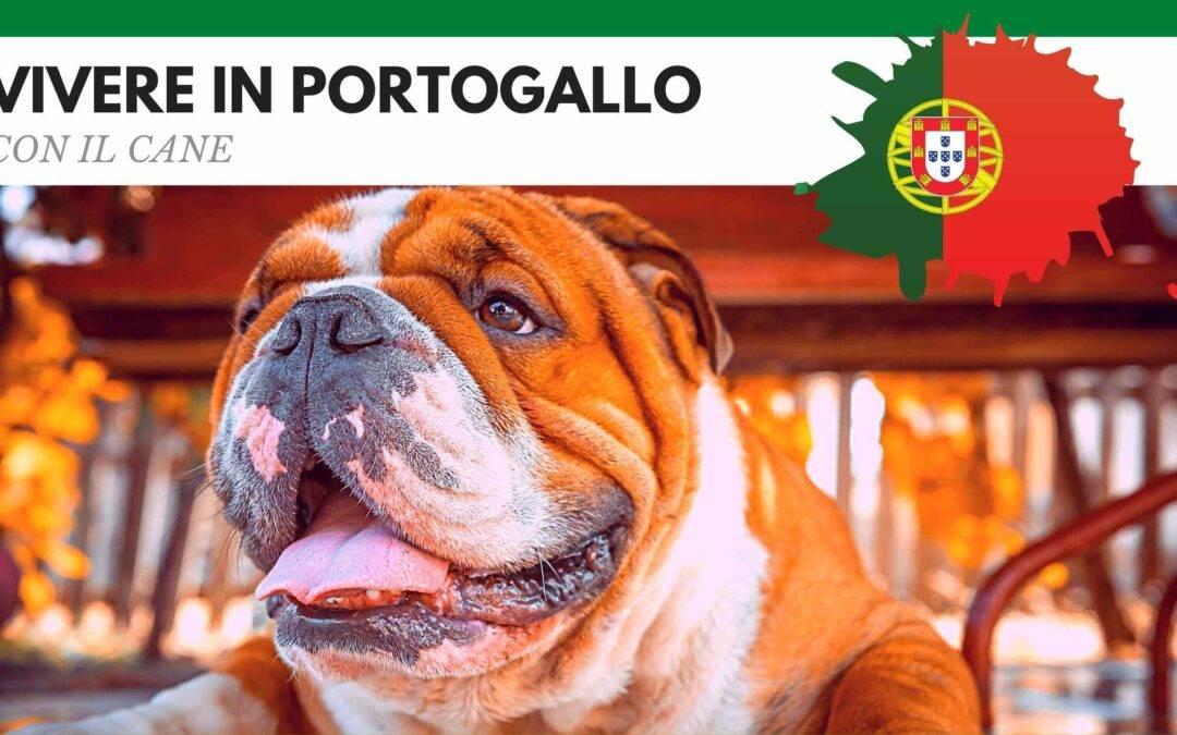 Vivere in Portogallo con il cane